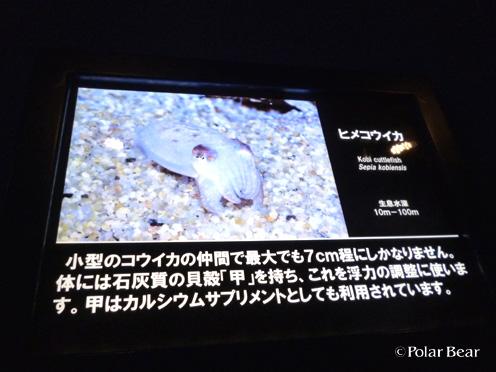 20141125himekouika03