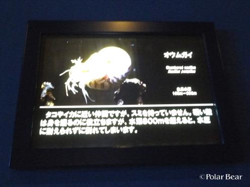 20141125oumugai04