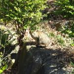 上野公園の猫