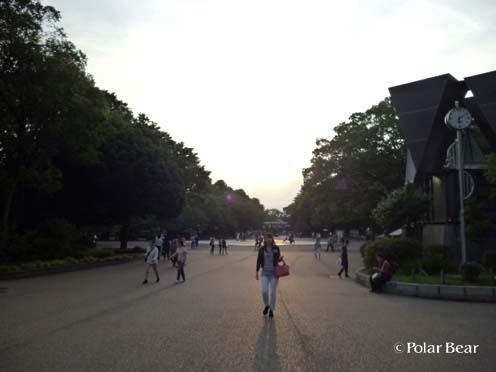 上野公園で見た空