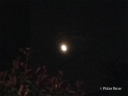 七夕のお月様