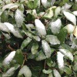 東京で11月に初雪