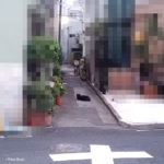 ネコ 猫 涼しい場所 ポーラベア