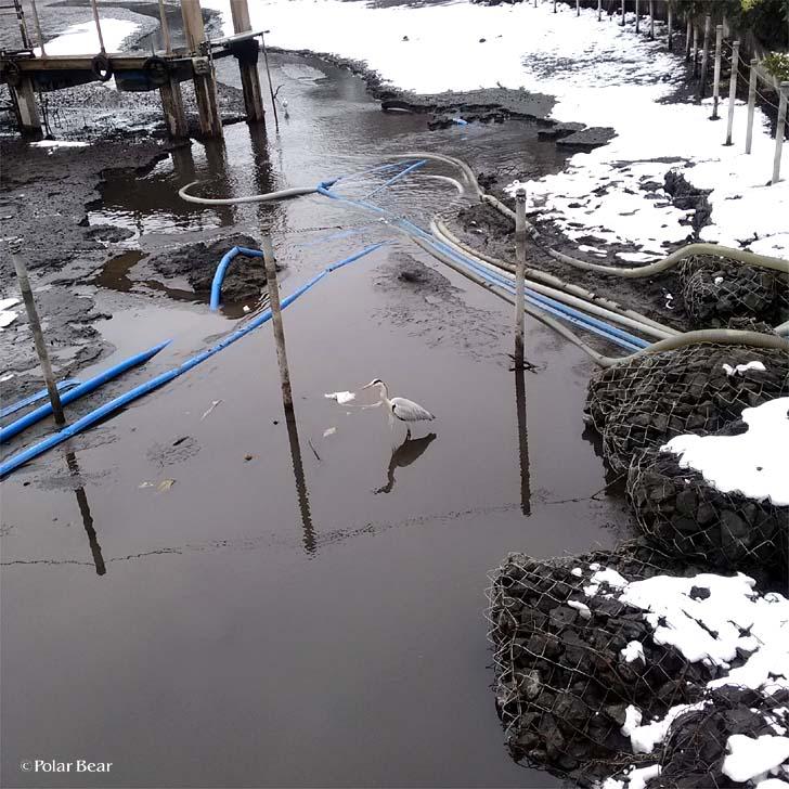 井の頭公園 井の頭池 かいぼり ポーラベア