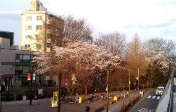 2018年 桜 三鷹駅前 ポーラベア