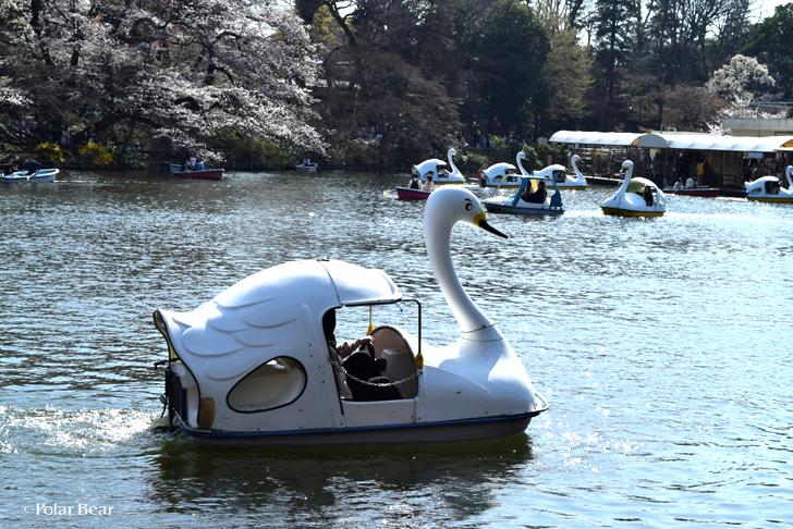 2018年 桜 井の頭公園 井の頭池 スワンボート ポーラベア