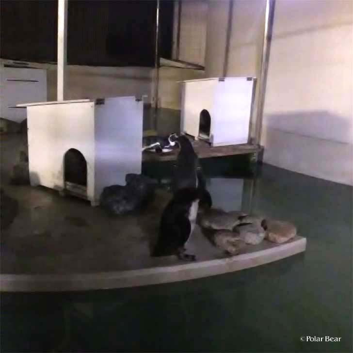 吉祥寺 井の頭自然文化園 秋の夜長の自然文化園 ポーラベア ペンギン