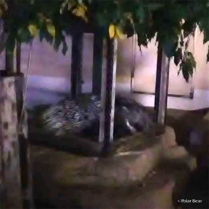吉祥寺 井の頭自然文化園 秋の夜長の自然文化園 ポーラベア ヤマアラシ