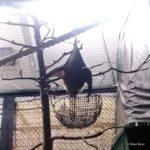 吉祥寺 井の頭自然文化園 秋の夜長の自然文化園 ポーラベア オリイオオコウモリ