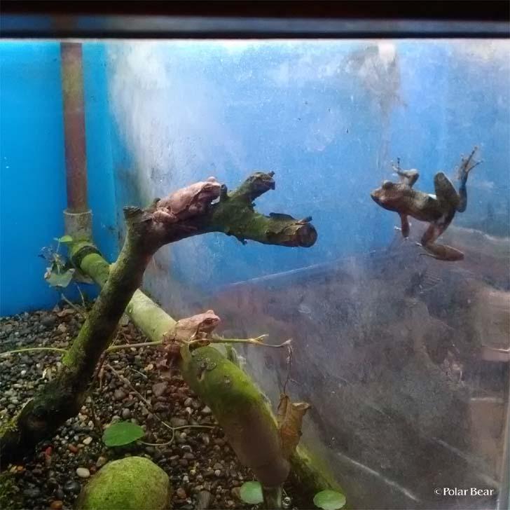 吉祥寺 井の頭自然文化園 秋の夜長の自然文化園 ポーラベア 水生物園 カエル