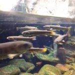 吉祥寺 井の頭自然文化園 秋の夜長の自然文化園 ポーラベア 水生物園