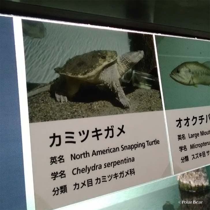吉祥寺 井の頭自然文化園 秋の夜長の自然文化園 ポーラベア 水生物園 カミツキガメ