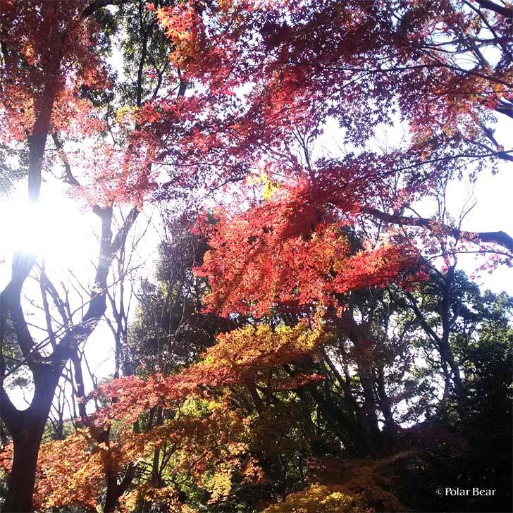 上野公園 紅葉 ポーラベア