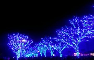 渋谷 代々木公園 イルミネーション 青の洞窟 ポーラベア