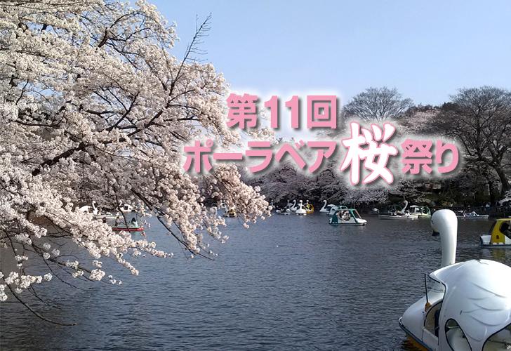 2018年 桜 ポーラベア