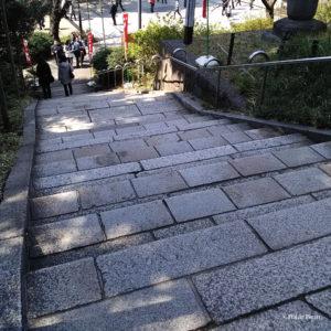 台東区 上野恩賜公園 清水坂 きよみずざか ポーラベア