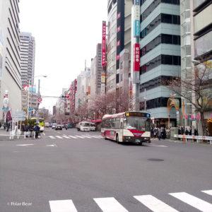 中野区 都道420号 中野通り 桜 桜並木 ポーラベア