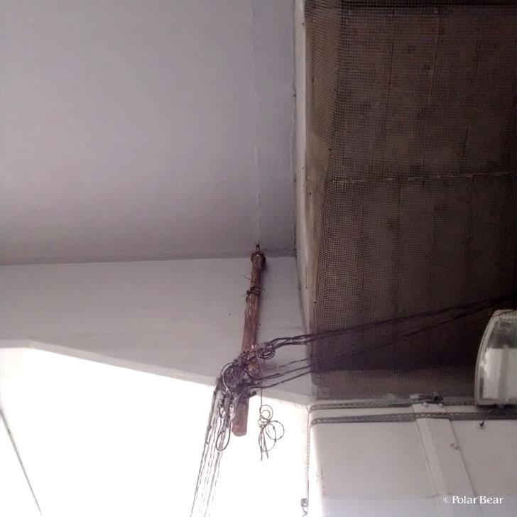 中央線 ツバメ 燕 ポーラベア