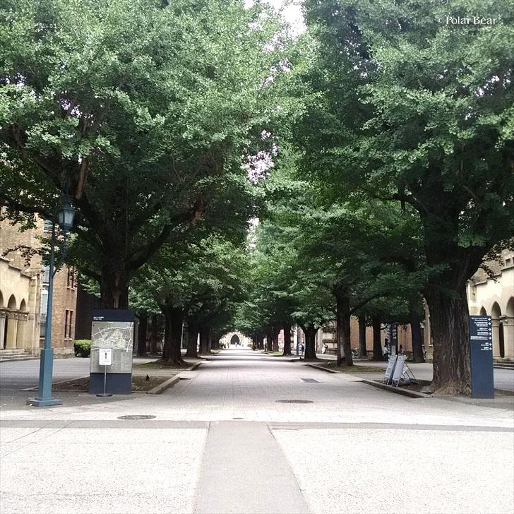 東京大学 東大 本郷 正門 銀杏並木 ポーラベア