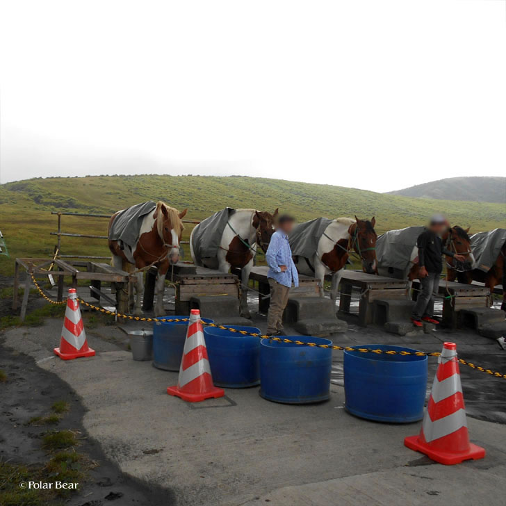 熊本県 阿蘇 観光 ポーラベア 乗馬