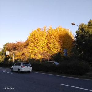 日比谷公園 ポーラベア 紅葉 銀杏
