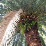 郷土の森 日比谷公園 ポーラベア 紅葉 銀杏 宮崎県の木のひとつ 宮崎県 フェニックス