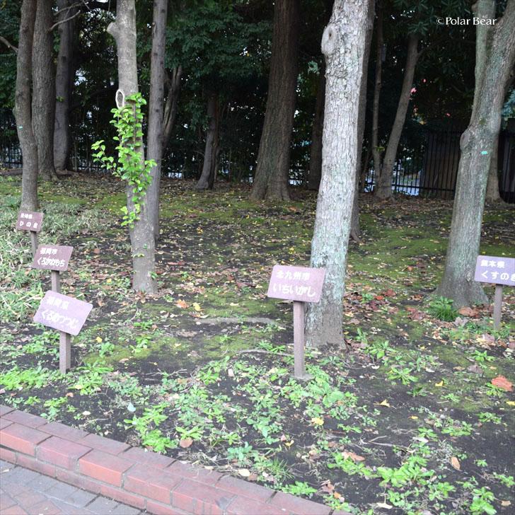郷土の森 日比谷公園 ポーラベア 紅葉 銀杏