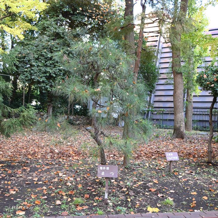 郷土の森 日比谷公園 福井県 福井県の木 まつポーラベア 紅葉 銀杏