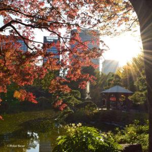 日比谷公園 ポーラベア 紅葉 銀杏 紅葉狩り 池 噴水 東屋
