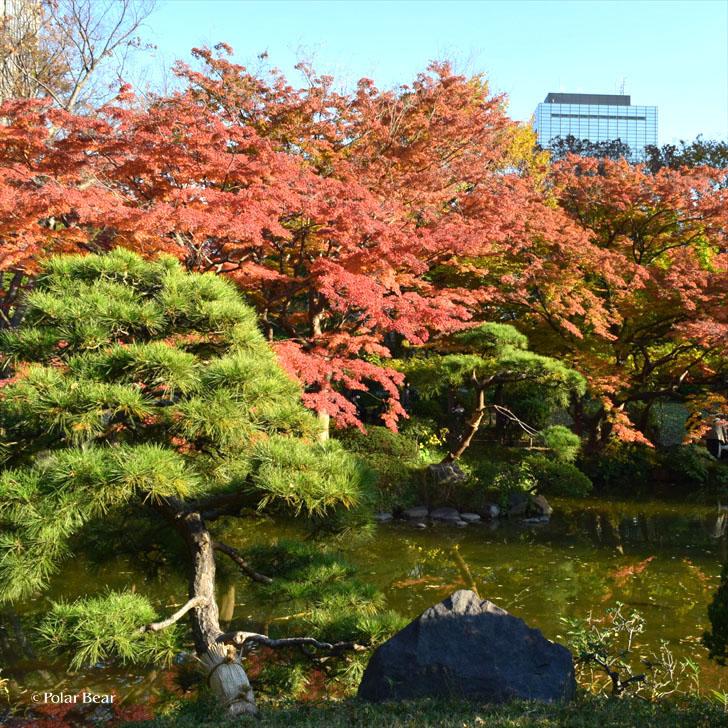 日比谷公園 ポーラベア 紅葉 銀杏 紅葉狩り 池 噴水