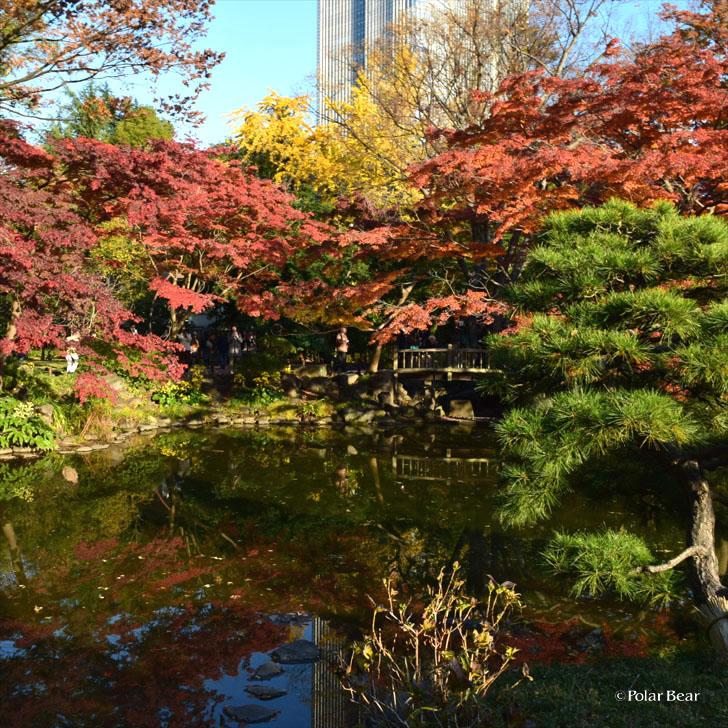 日比谷公園 ポーラベア 紅葉 銀杏 紅葉狩り 池