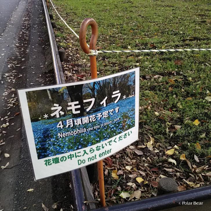 日比谷公園 ポーラベア 紅葉 銀杏 ネモフィラ 紅葉狩り