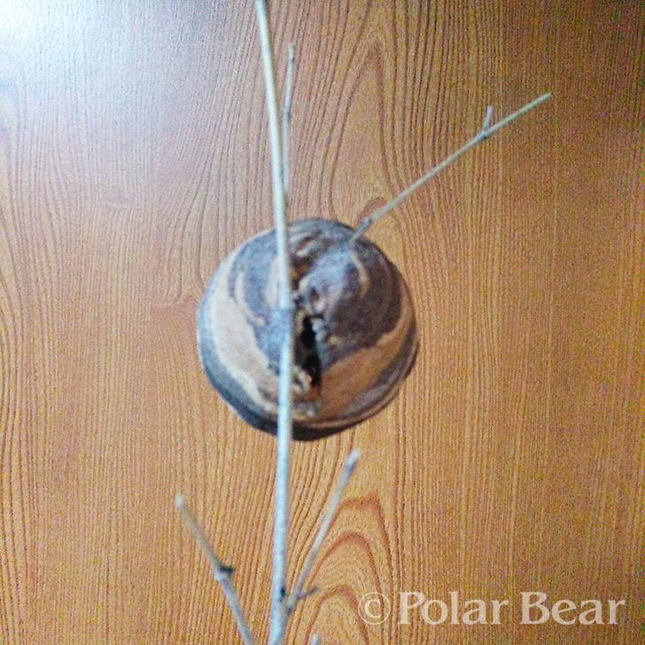 ポーラベア 株式会社ポーラベア 蜂の巣 コガタスズメバチ スズメバチ