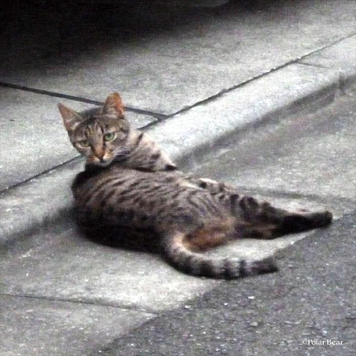 株式会社ポーラベア ポーラベア ネコの日 neko cat 猫 ねこ 散策